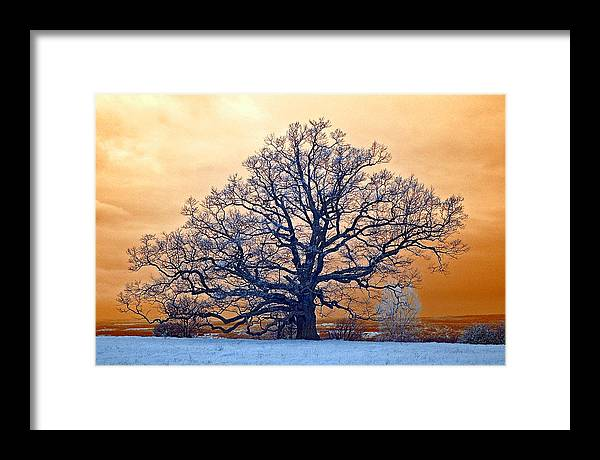 Tree Framed Print featuring the photograph Standing Guard by Stephen Pacello