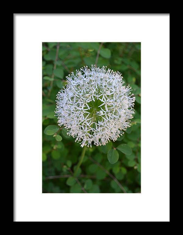 Nature Framed Print featuring the photograph Star by Tiffany Ball-Zerges