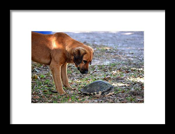 Framed Print featuring the photograph Stare Down by Katrina Johns