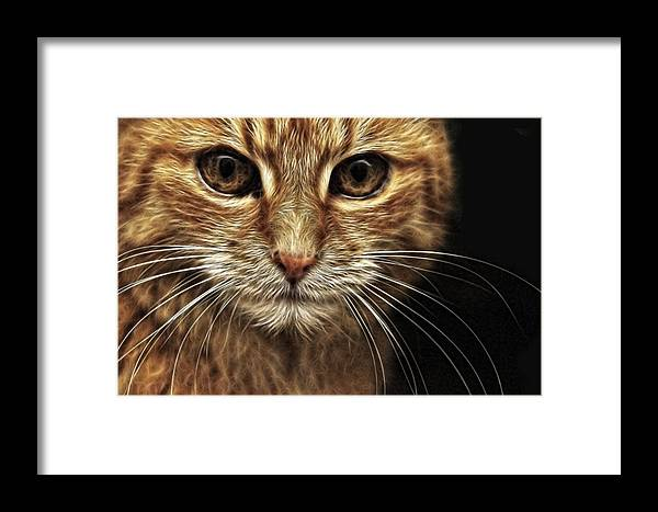Cat Framed Print featuring the digital art Stare by Tilly Williams