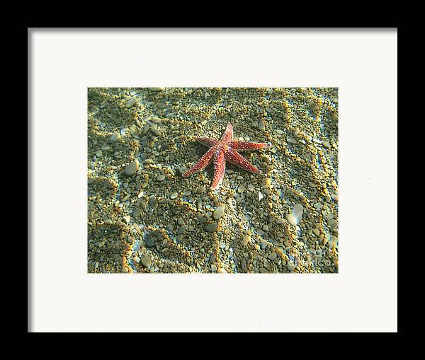 Underwater Framed Print featuring the photograph Starfish In Shallow Water by Ted Kinsman