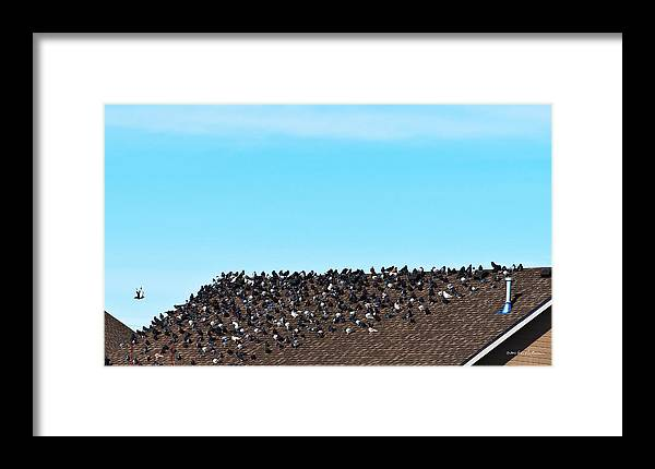 Pigeon Framed Print featuring the photograph Staying Warm by Edward Peterson