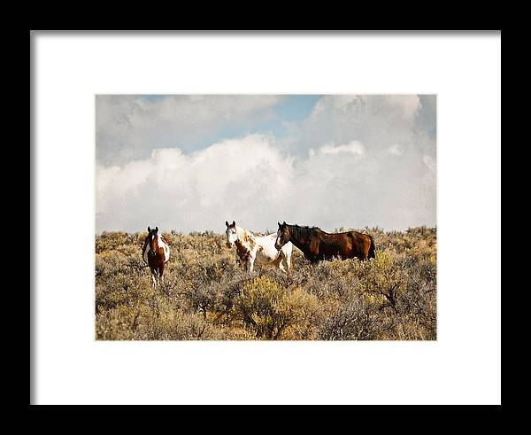 Horse Framed Print featuring the photograph Steens Wild Horses by Steve McKinzie