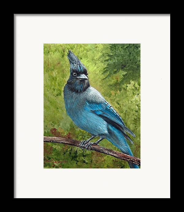 Stellar Jay Framed Print featuring the painting Stellar Jay by Dee Carpenter