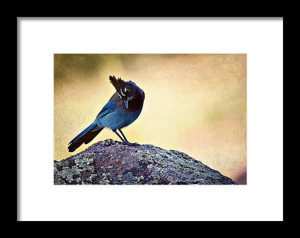 cyanocitta Stelleri Framed Print featuring the photograph Stellers Rock by Lana Trussell
