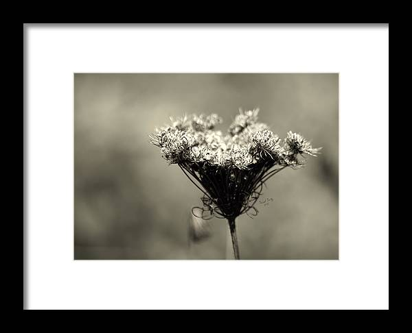 Flower Framed Print featuring the photograph Still Beautiful by Trish Tritz
