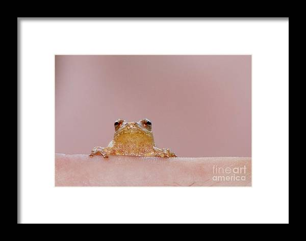 Tree Frog Framed Print featuring the photograph Still Lookin At Me by Lila Fisher-Wenzel