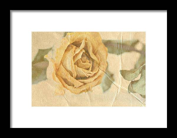 Rose Framed Print featuring the photograph Still With You by Deborah Hall Barry