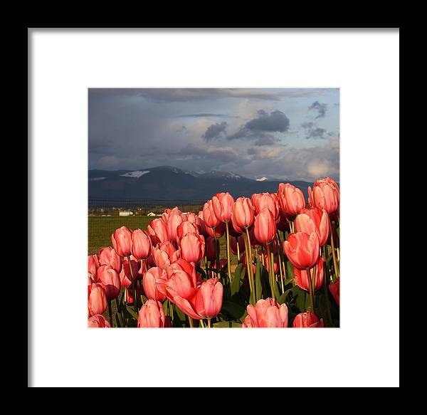 Flowers Framed Print featuring the photograph Stormin' Tulips by Jeannine Welfelt