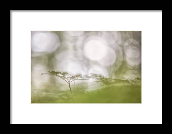 Nature Framed Print featuring the photograph Strange Back by Michele Pietrangelo