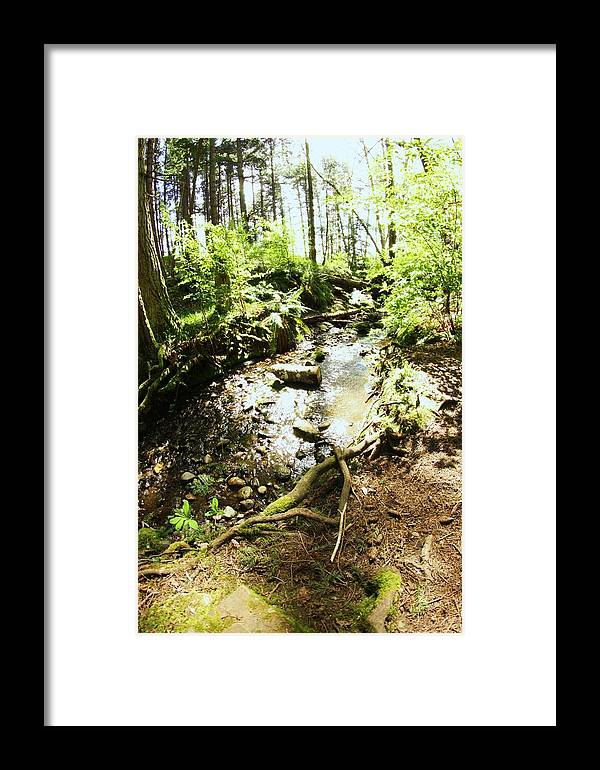 Forest Framed Print featuring the photograph Stream At Devonian Park by Erica Rieger