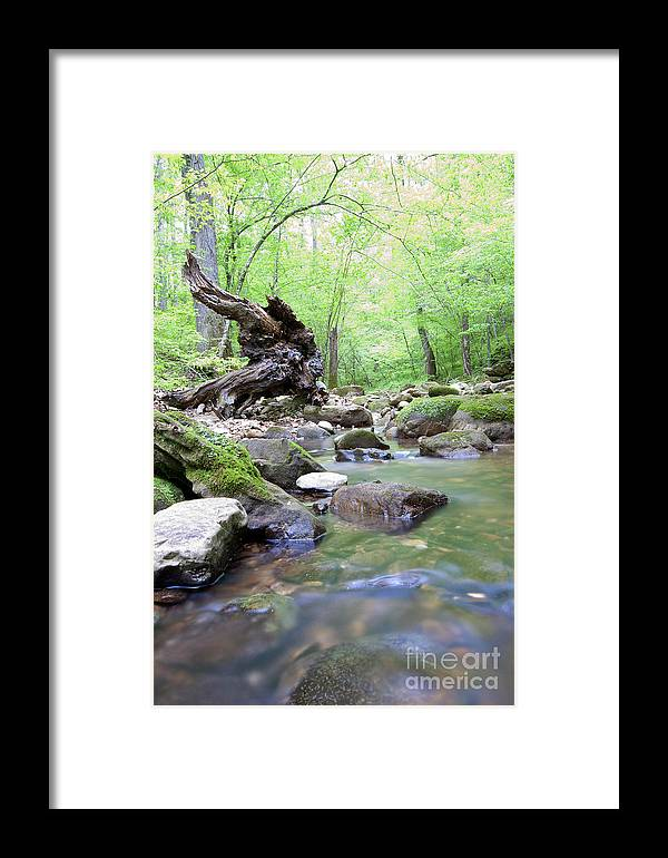 Nature Framed Print featuring the photograph Streaming by Sandy Burkhardt