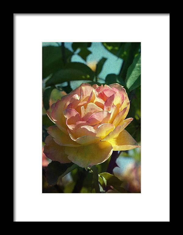 Photo Collage Framed Print featuring the photograph Strike It Rich Rose by Linda Dunn