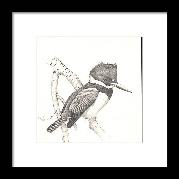 Kingfisher Framed Print featuring the drawing study for Belted Kingfisher painting by Bill Gehring