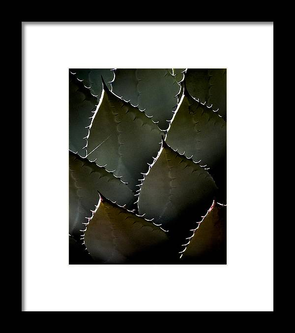 Plant Framed Print featuring the photograph Succulent by Jim Painter