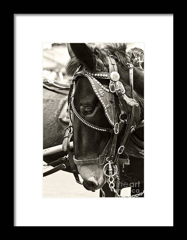 New Orleans Framed Print featuring the photograph Sugar by Leslie Leda