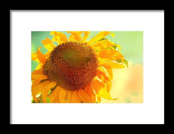 Sunflower Framed Print featuring the photograph Summer Daydream by Toni Hopper