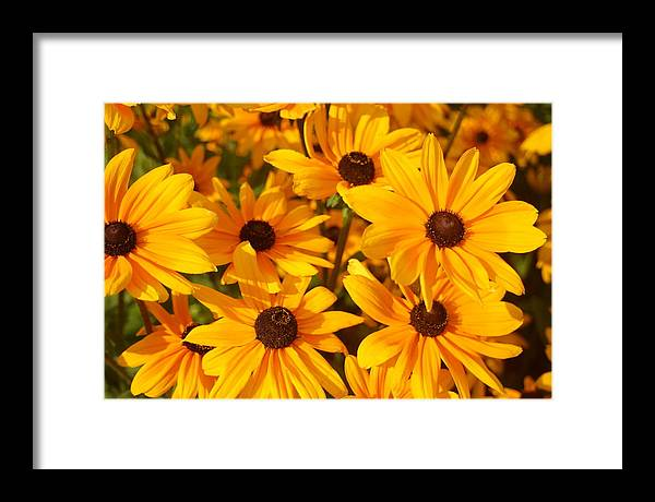 Flowers Framed Print featuring the photograph Summer Glow by Laurel Gillespie