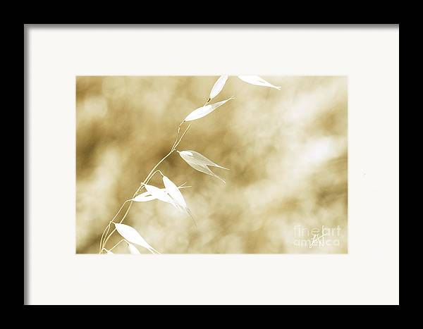 Summer Wheat Framed Print featuring the photograph Summer Grass by Artist and Photographer Laura Wrede