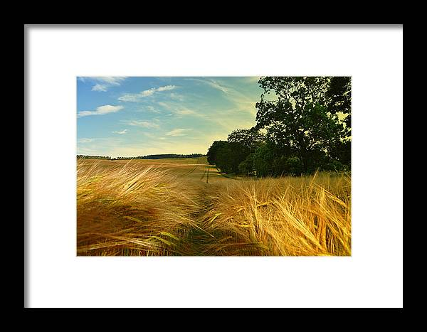 Summer Framed Print featuring the photograph Summer Harvest by Kevin Askew