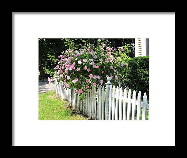 Rose Framed Print featuring the photograph Summer In Maine by Mary Ellen Mueller Legault