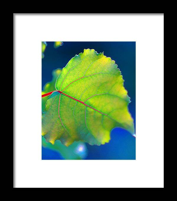 Summer Framed Print featuring the photograph Summer Leaf by K Toney