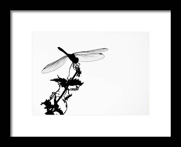 Dragon Fly Framed Print featuring the photograph Summer Memory by Valentin Katrandzhiev