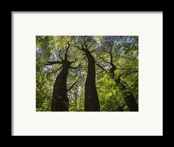 Landscape Framed Print featuring the photograph Summer Mood by Vladimir Kholostykh