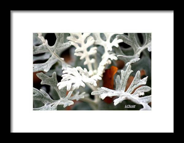 Plants Framed Print featuring the photograph Summer Snow by LC Linda Scott