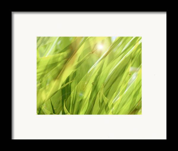Green Framed Print featuring the photograph Summertime Green by Ann Powell