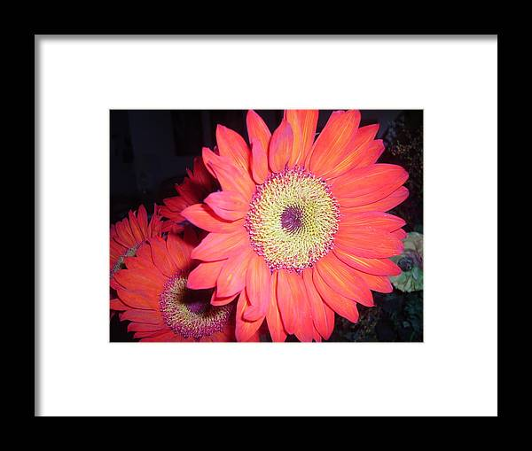Flowers Framed Print featuring the photograph Sun Burst by Fran Loando