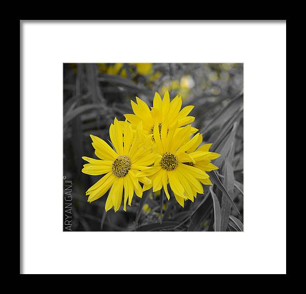 Yellow Framed Print featuring the photograph Sun is Up by Aryan Ganji