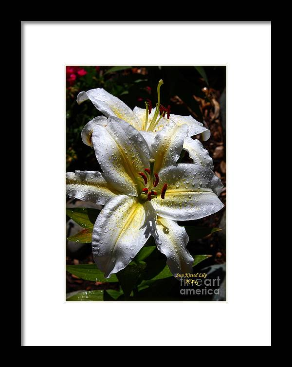 Sun Kissed Lily Framed Print featuring the photograph Sun Kissed Lily by Patrick Witz