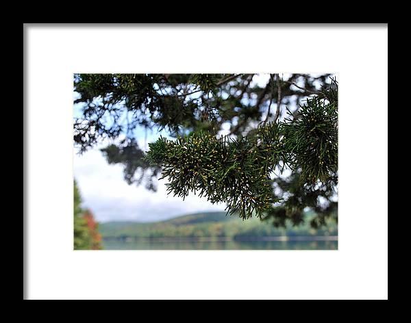 Autumn Framed Print featuring the photograph Sun Pine 2 by Robert Bottass