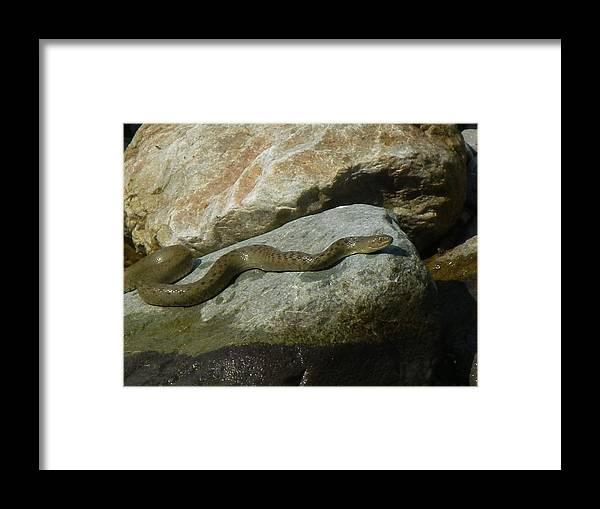 Snake Framed Print featuring the photograph Sunbath by Manoj Upreti