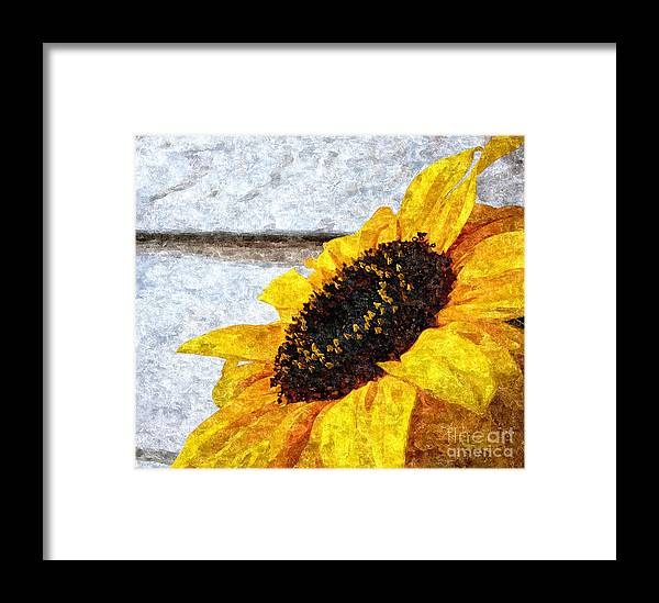 Sunflower Paint Framed Print featuring the photograph Sunflower Paint by Slavi Begov