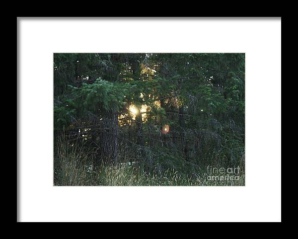 Framed Print featuring the photograph Sunlight Orbs by Jane Whyte