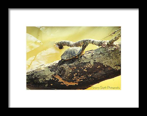 Turlte Framed Print featuring the photograph Sunning by Marjorie Smith