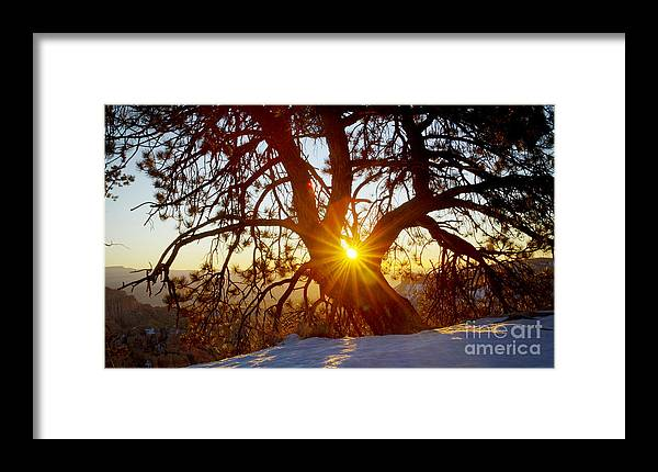 Bryce Canyon Framed Print featuring the photograph Sunrise Pine by Idaho Scenic Images Linda Lantzy
