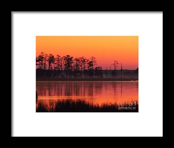 Trees Framed Print featuring the photograph Sunrise Trees by Rrrose Pix