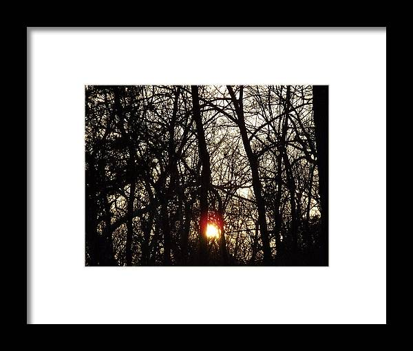 Trees Framed Print featuring the photograph Sunset Through Trees by Shannon Bever