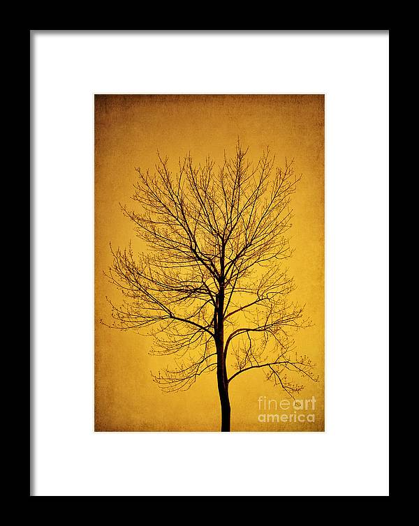 Sunset Framed Print featuring the photograph Sunset Tree Silhouette by Cheryl Davis