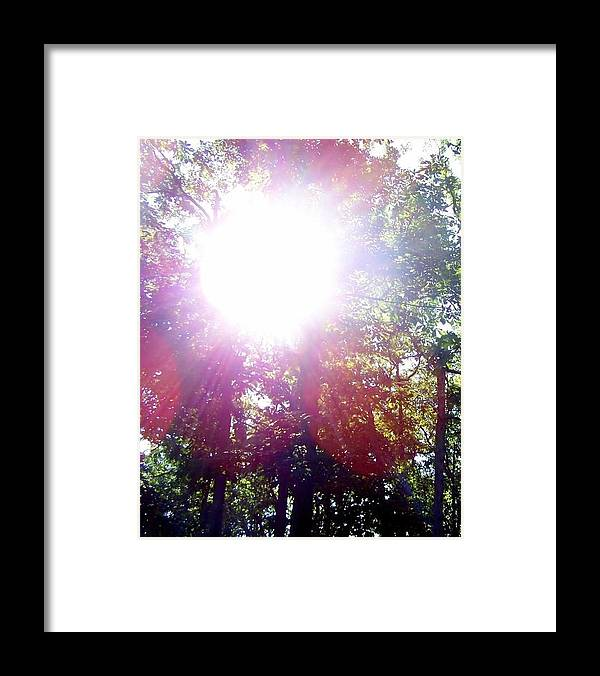 Forest Framed Print featuring the photograph Sunshine by Kathleen Brown