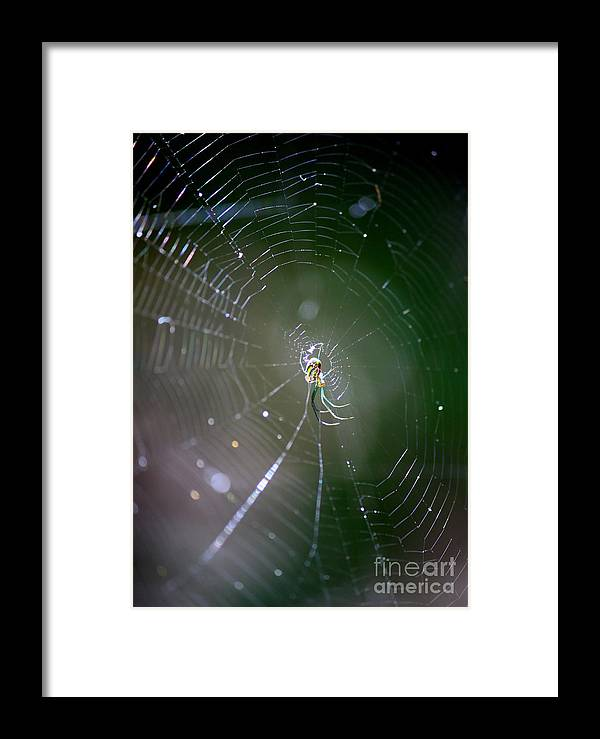 Swamp Spider Framed Print featuring the photograph Sunshine On Swamp Spider by Carol Groenen
