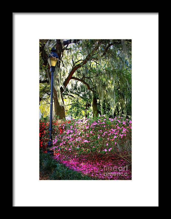 Savannah Framed Print featuring the photograph Sunshine Through Savannah Park Trees by Carol Groenen