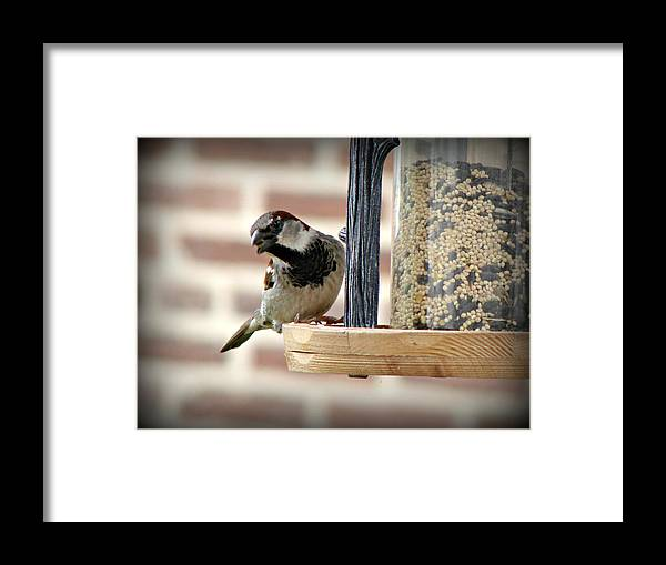 Bird Framed Print featuring the photograph 'sup by Brenda Conrad