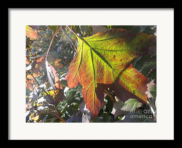 Leaves Framed Print featuring the photograph Surrender by Trish Hale