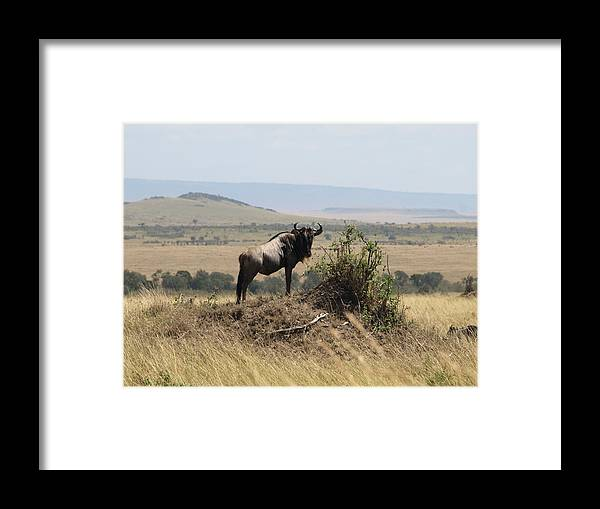 Kenya Framed Print featuring the photograph Surveying My Territory by Carol Evans