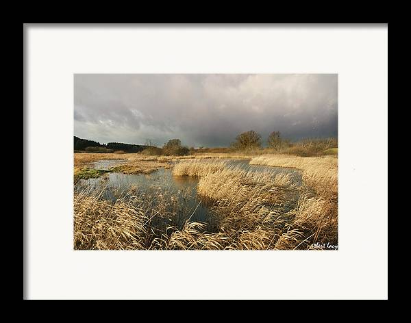 Swampland Framed Print featuring the photograph Swampland by Robert Lacy