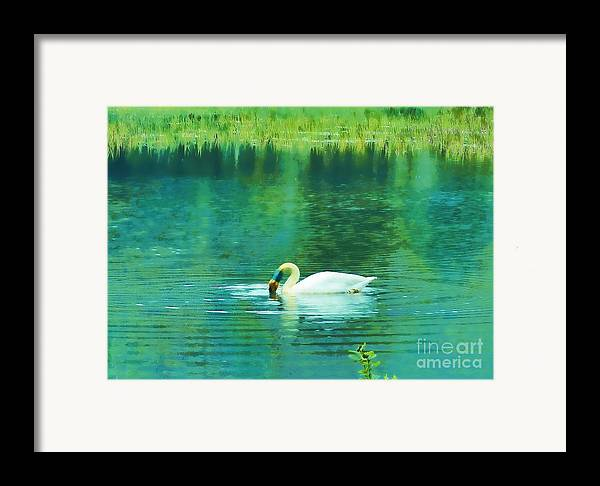 Swan Framed Print featuring the photograph Swan Lake by Judi Bagwell